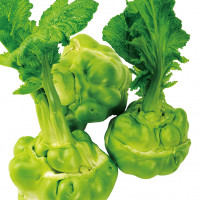 食べ方いろいろ、新品種!玉タカナ『貴州搾菜』